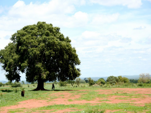 Malawi Presentation