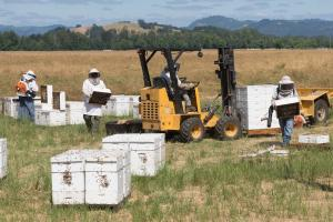 Bee In The Know: 'Smart Hive' Technology For Beekeepers