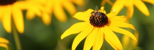 Bee researchers quotes in N&O, TechWire stories
