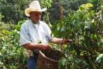 Costa Rica -Global Supply Chain and Human Logistics in the Coffee Industry